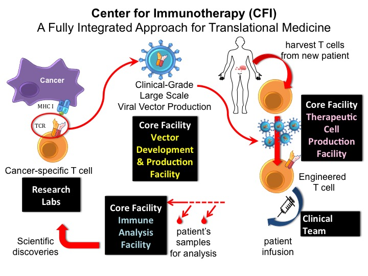 How Immunotherapy Works Roswell Park Cancer Institute