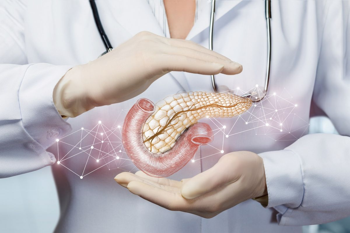 Pancreas stock image