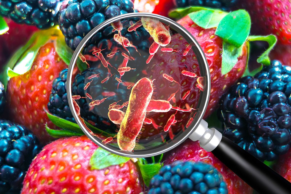 A magnifying glass hovers over strawberries and blackberries to reveal bacteria